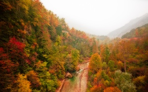 Picture autumn, forest, mountains, fog, river