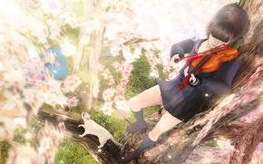 Picture cat, girl, violin