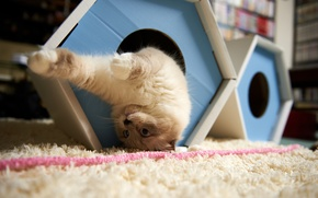 Wallpaper cat, the game, house, upside down, carpet