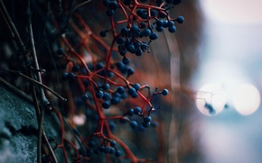 Picture lights, berries, wall