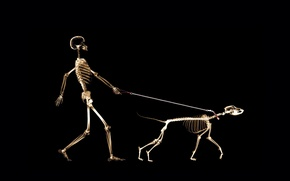 Picture dog, people, leash, x-ray