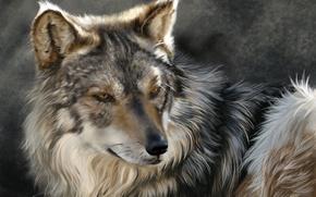 Picture face, wolf, predator, art