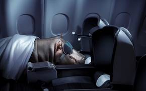 Picture sleep, Hippo, flight