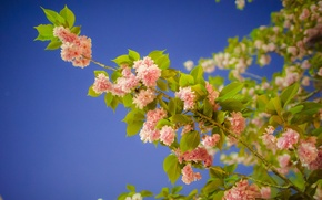 Picture the sky, leaves, flowers, branch, spring, garden