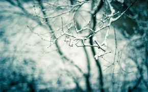 Picture snow, nature, tree, branch, spring, kidney