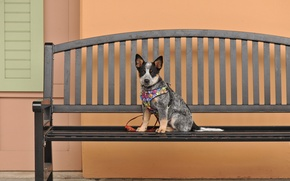 Picture dog, look, bench, each