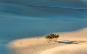 Picture sand, trees, landscape
