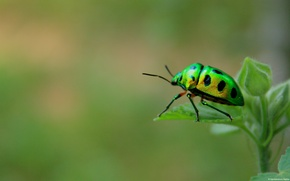 Picture macro, beetle, insect, green beetle