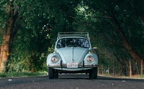 Picture car, Volkswagen, road, trees, Beetle, Volkswagen Beetle