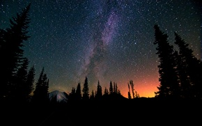 Picture forest, space, stars, trees, night, space, the milky way