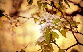 Picture nature, style, background, tree