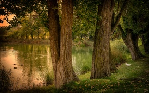Picture trees, pond, duck, Spain, nature, Spain, forest., pond, Gerona