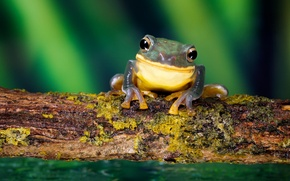 Picture forest, smile, frog, nature, frog, smile, macro, small