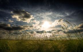 Picture field, landscape, ear