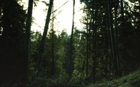 Picture Nature, Focus, Morning, Blur, Forest, North, Woods, Autumn Aurora