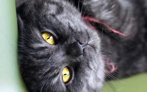 Picture cat, cat, look, black, striped, cat