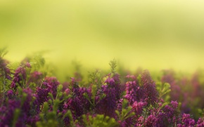 Picture flowers, garden, bokeh