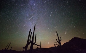 Picture night, space, stars, cacti