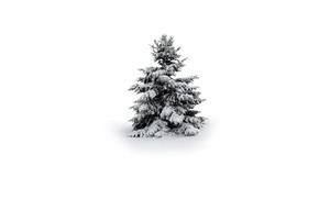 Wallpaper winter, snow, tree