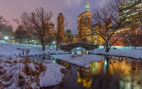 Picture winter, snow, trees, night, branches, lake, reflection, duck, New York, skyscrapers, mirror, Central Park, United …
