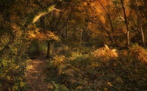 Picture autumn, forest, trees, trail