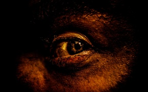 Picture BACKGROUND, BLACK, EYES, The PUPIL, FACE