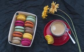 Picture coffee, Cup, gerbera, macaroon