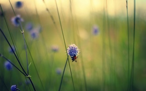 Picture macro, flowers, bee, stems, field, lilac