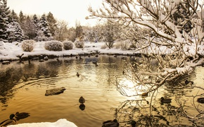 Picture twilight, trees, sunset, winter, lake, rocks, snow, dusk, reflection, freeze, branches, ducks, mirror, ripples, frost