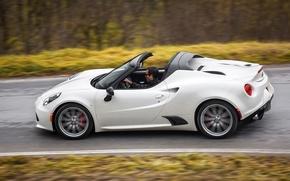 Picture Grass, Forest, Profile, Alfa Romeo, Spider, Alfa Romeo