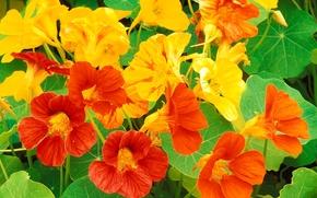 Picture leaves, petals, garden, flowerbed