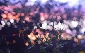 Wallpaper autumn, the sky, color, sunset, mood, Flowers, by mike pro