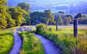 Picture road, grass, trees, nature, fence