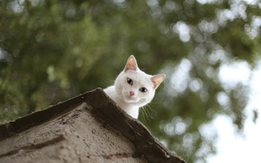 Picture roof, cat, eyes, cat