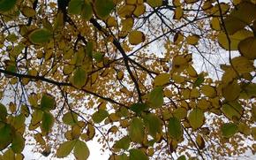 Picture Nature, Autumn, Foliage