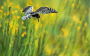Picture flight, background, bird, wings