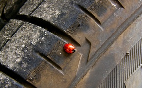 Wallpaper beetle, wheel