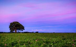 Wallpaper field, landscape, sunset, clover