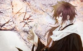 Picture flower, spring, Sakura, guy, art. anime, souji akita