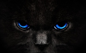 Picture cat, eyes, cat, look, black