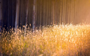 Picture autumn, forest, grass, light