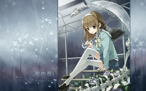 Picture drops, greenhouse, umbrella, skeleton, braids, schoolgirl, wings, sailor