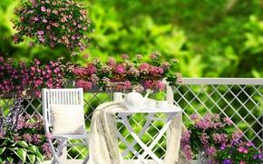 Picture flowers, flowers, veranda, tea, garden, nature, garden, coffee, coffee, grass, veranda, grass, nature, tea