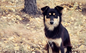 Picture autumn, grass, look, leaves, tree, Dog, dog, dog, mongrel