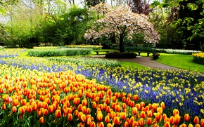 Wallpaper trees, Park, spring, tulips, tulips, daffodils, spring