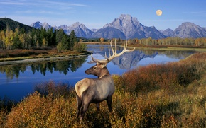 Picture grass, trees, landscape, mountains, nature, lake, river, the moon, deer, horns