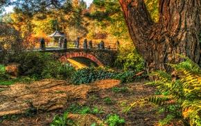 Picture autumn, trees, bridge, Park, HDR, gazebo, the bushes