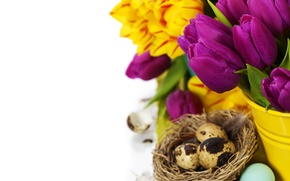 Picture tulips, flowers, tulips, purple, eggs, easter, bouquet