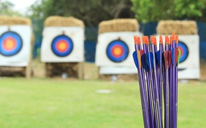 Picture arrows, training, archery, target shooting