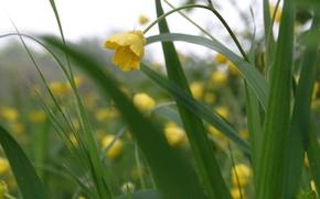 Picture greens, flower, spring, Akela White